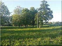 TQ1988 : Roe Green Park, Kingsbury by David Howard