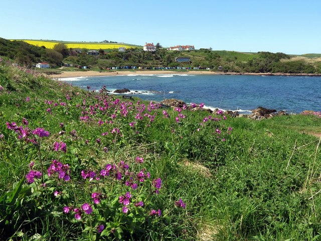 Coldingham Bay from Milldown Point