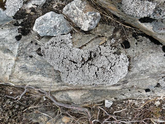 Lichens on the slope of Creag Riabhach Loch nan Sgaraig