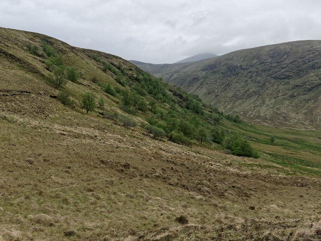 Woodland below Leitir à Choire