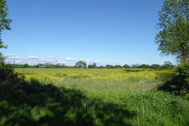 Field beside Katie Lane