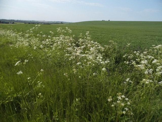 Fields by Warren Lane, Clothall