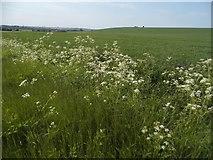 TL2633 : Fields by Warren Lane, Clothall by David Howard