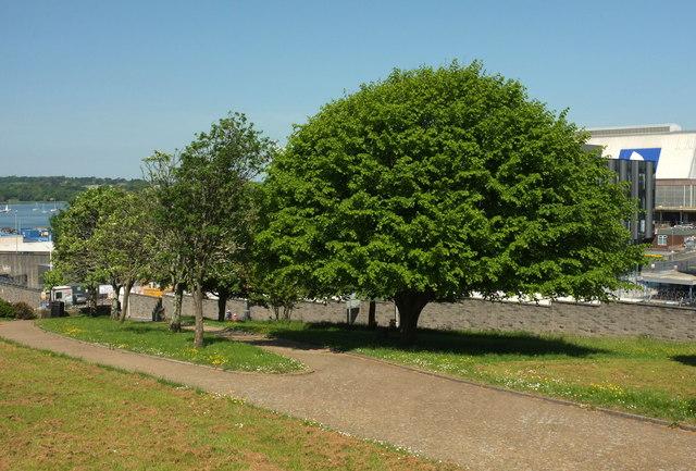 Trees, Devonport Park