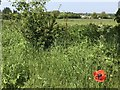TF6528 : A lone poppy in Wolferton, Norfolk by Richard Humphrey