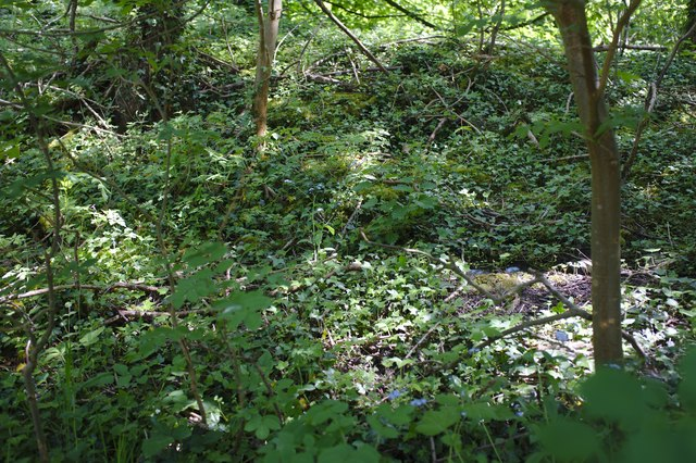 Dappled light in the undergrowth