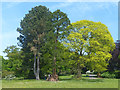 ST3087 : Spring foliage (2), Belle Vue Park, Newport by Robin Drayton