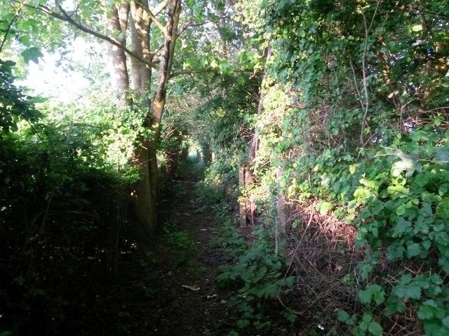 Wimborne Minster: footpath alongside the Wimborne Bypass
