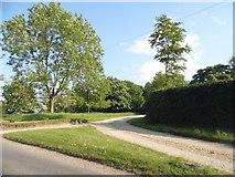 TL3033 : Roe Green by David Howard