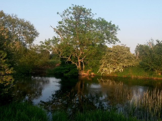 Canford Magna: a tree reflected in the Stour