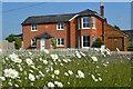SU3224 : Ox-eye daisies, roadside at Awbridge by David Martin