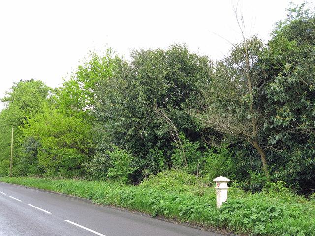 Lower Green Road (3)
