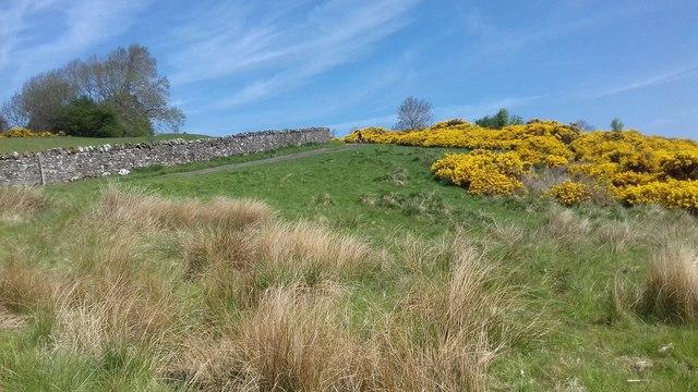 Lane from Caldbeck