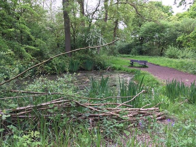 Pond in Howe Park Wood