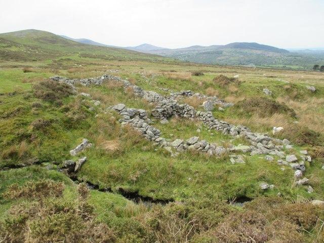 Ruinous sheepfold, Llanllechid