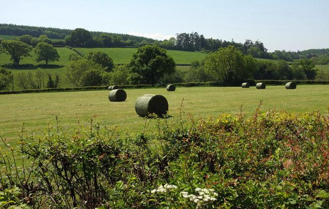 Bales near Merton Mill