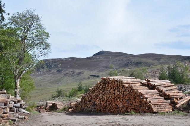 Timber stacks, Gorstean