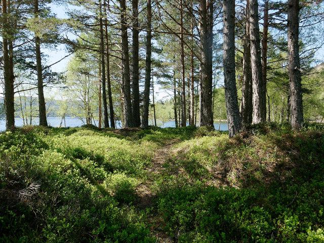 On an unnamed island in Loch Beinn a Mheadhoin