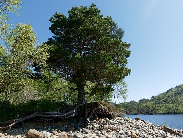 Shoreline of island in Loch Beinn a' Mheadhoin