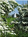 SE5314 : Norton Tower Mill framed by May blossom : Week 21