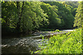 SX4766 : River Tavy by Derek Harper