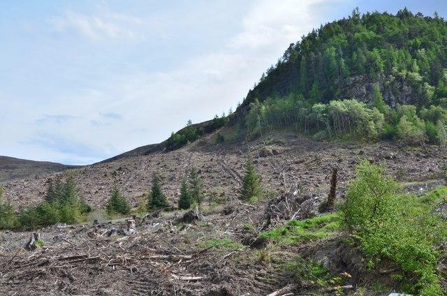 Clear-felled ground below Creag Chrocan