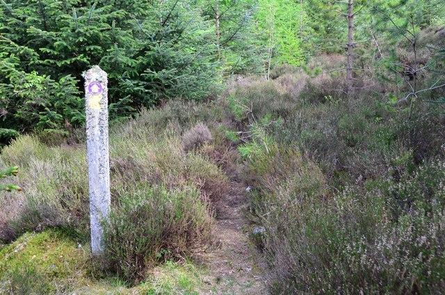 Overgrown path, Gorstean