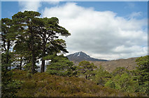NH1922 : Scots Pine beside the Affric Kintail Way by Julian Paren