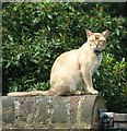 TG2308 : A Cathedral cat by Evelyn Simak