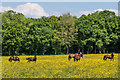 TQ2241 : Field of buttercups by Ian Capper