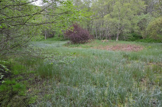 Choked pond, Laggan