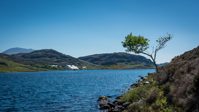 Tree on the shore of Loch Innis