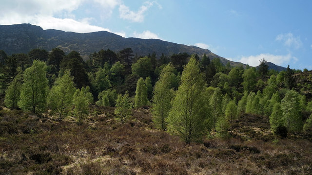 Natural woodland above Loch Affric
