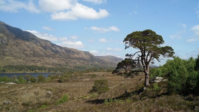 Beside the Affric Kintail Way