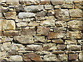 NY9149 : (Part of) the front wall of Riddlehamhope by Mike Quinn