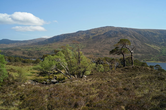 Trees by Allt Coire Leachavie