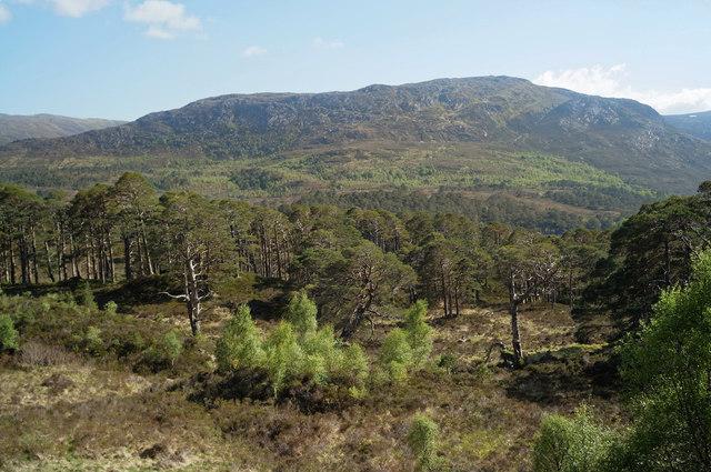 Woodland in Glen Affric