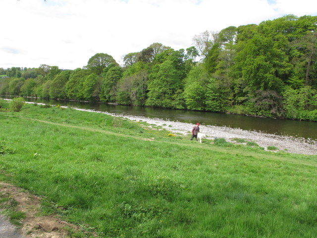 River Tweed at Abbotsford, with dog walker