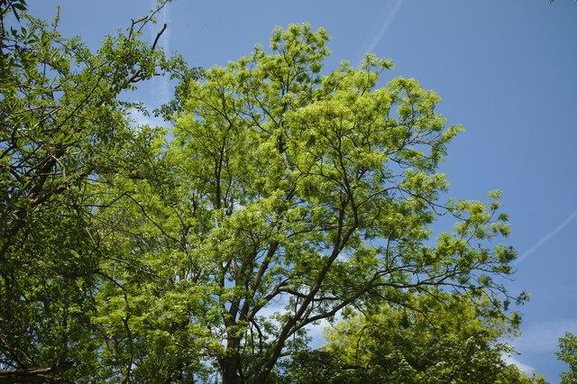 Sunlit canopy