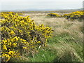 NR2064 : Gorse and rushes by M J Richardson