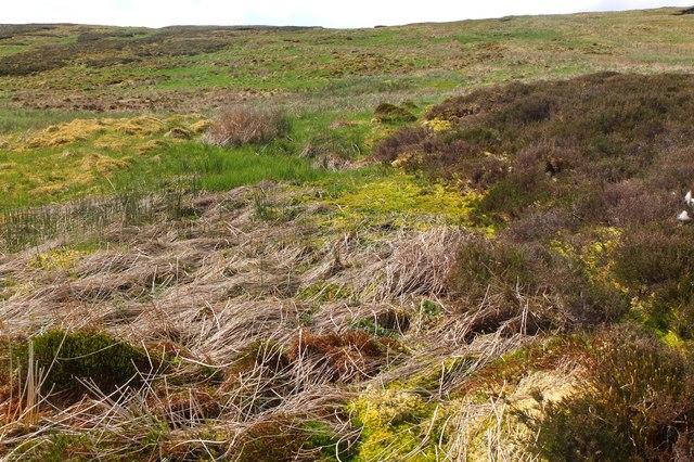 Boggy ground near Foulbrig