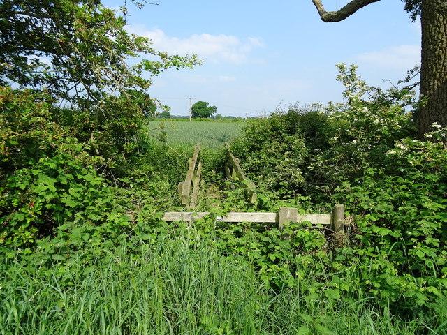 Overgrown footbridge