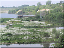 SP9314 : A sea of oxeye daisies on the Marsh at College Lake by Chris Reynolds