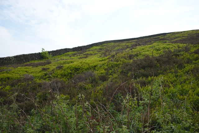 Heather-clad hillside