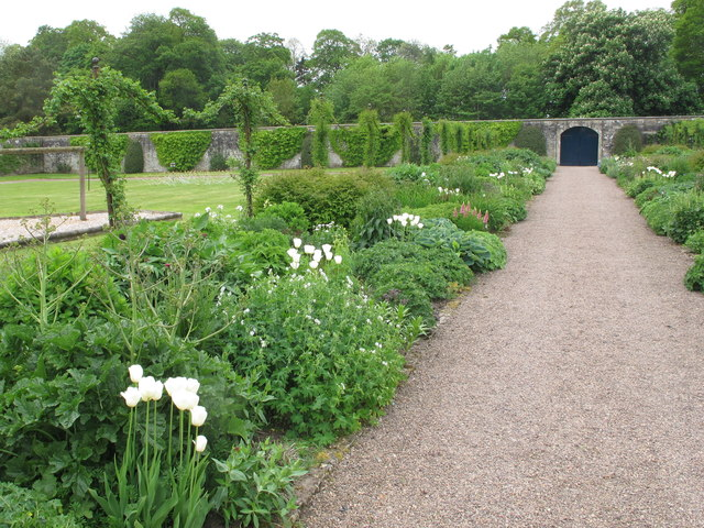 Walled garden with white tulips, Floors Castle