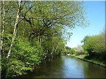 SK0305 : Wyrley & Essington Canal, looking north-east by Christine Johnstone