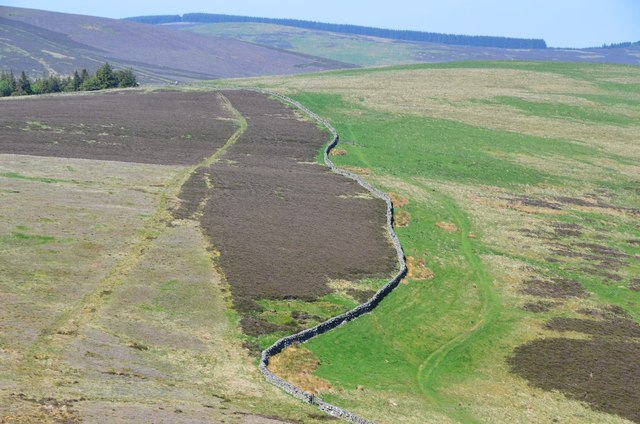 Paths and wall seen from Broomy Law
