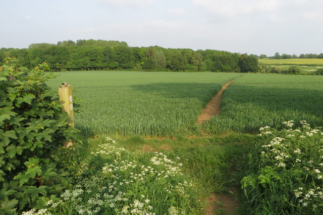 Footpath down to Thorny Covert