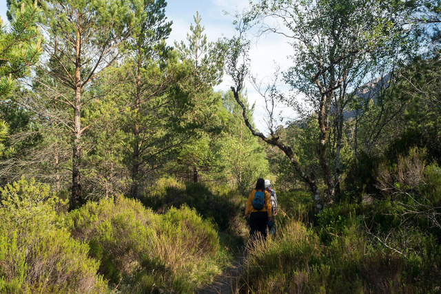On the Woodland Trail, Beinn Eighe Reserve