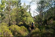 NG9965 : On the Woodland Trail, Beinn Eighe Reserve by Julian Paren